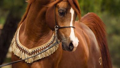 Pferde Hessen Kostenlos Herunterladen 390x220 - Pferde Hessen Kostenlos Herunterladen