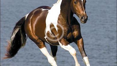 Pferde Hintergrundbilder Für Facebook 390x220 - Pferde Hintergrundbilder Für Facebook