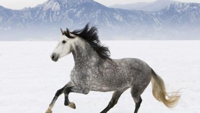 Pferde Im Schnee Bilder Für Facebook 390x220 - Pferde Im Schnee Bilder Für Facebook