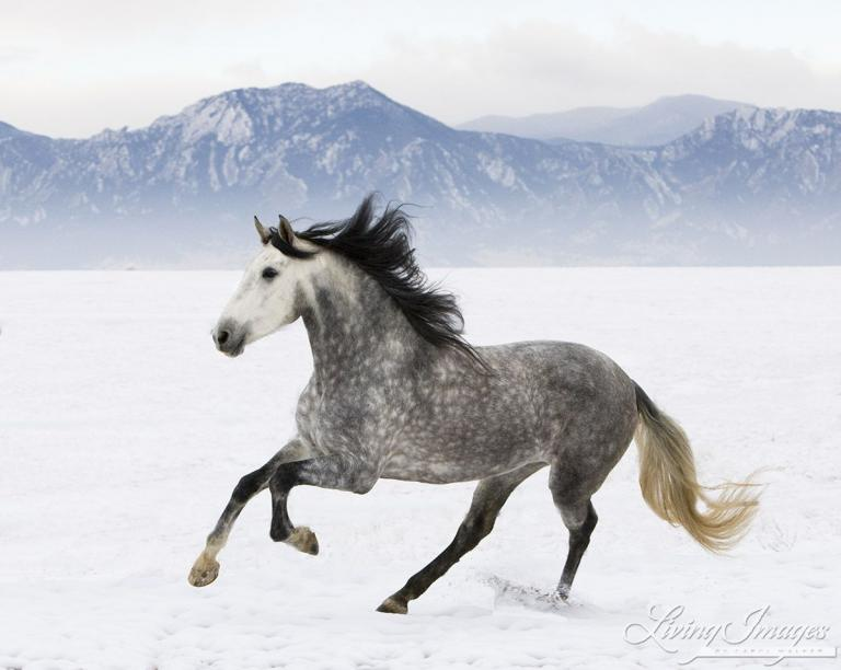 pferde im schnee bilder für facebook  bilder und sprüche