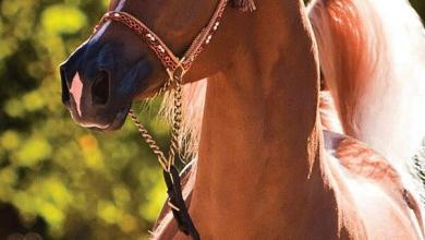 Pferde Im Schnee Bilder Für Whatsapp 390x220 - Pferde Im Schnee Bilder Für Whatsapp