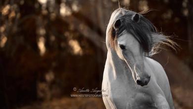 Pferde Infos Für Facebook 390x220 - Pferde Infos Für Facebook
