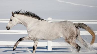 Pferde Infos Kostenlos Herunterladen 390x220 - Pferde Infos Kostenlos Herunterladen