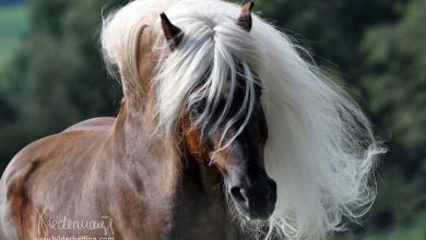 Pferde Kaufen 390x220 - Pferde Kaufen