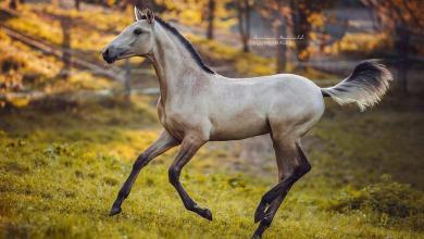 Pferde Kaufen Bayern Kostenlos Herunterladen 390x220 - Pferde Kaufen Bayern Kostenlos Herunterladen