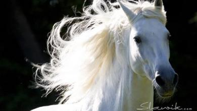 Pferde Kaufen Bilder 390x220 - Pferde Kaufen Bilder