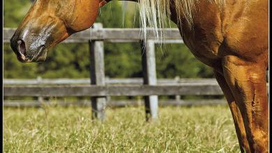 Pferde Kaufen Billig Für Whatsapp 390x220 - Pferde Kaufen Billig Für Whatsapp