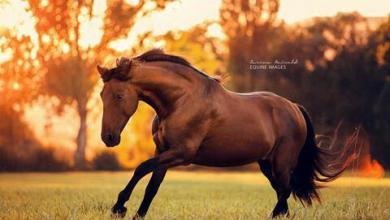 Pferde Kaufen Für Facebook 390x220 - Pferde Kaufen Für Facebook
