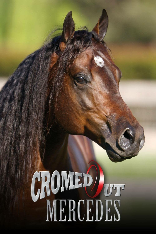 pferde kaufen friesen für whatsapp  bilder und sprüche
