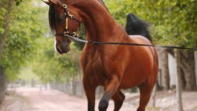 Pferde Kaufen Memmingen Für Whatsapp 390x220 - Pferde Kaufen Memmingen Für Whatsapp