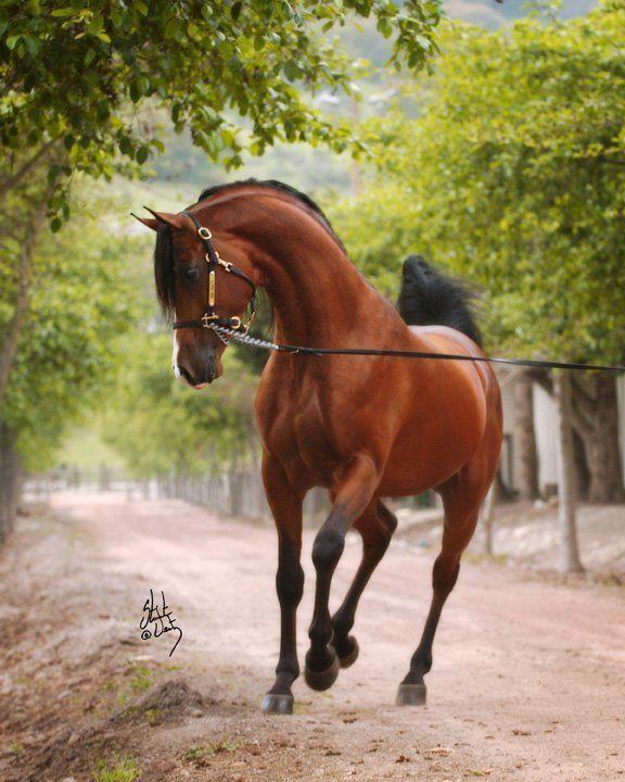 Pferde Kaufen Memmingen Für Whatsapp - Pferde Kaufen Memmingen Für Whatsapp
