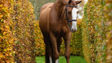 Pferde Kaufen Online 390x220 - Pferde Kaufen Online