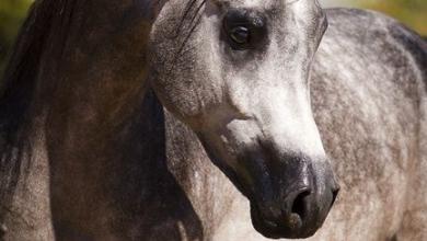 Pferde Kaufen Polen Kostenlos Herunterladen 390x220 - Pferde Kaufen Polen Kostenlos Herunterladen