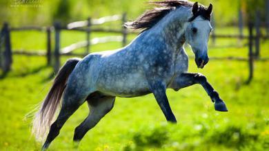 Pferde Kaufen Privat Für Whatsapp 390x220 - Pferde Kaufen Privat Für Whatsapp