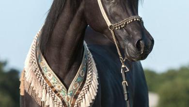 Pferde Kaufen Privat Kostenlos Herunterladen 390x220 - Pferde Kaufen Privat Kostenlos Herunterladen