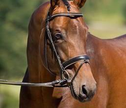 Pferde Kaufen Verkaufen Für Facebook 257x220 - Pferde Kaufen Verkaufen Für Facebook