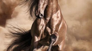 Pferde Kaufen Warendorf Für Whatsapp 390x220 - Pferde Kaufen Warendorf Für Whatsapp