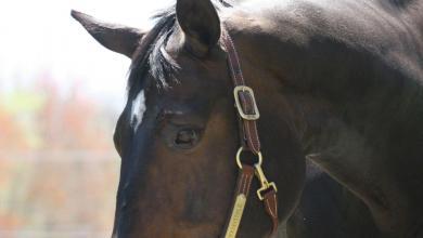 Pferde Kostenlos Herunterladen 390x220 - Pferde Kostenlos Herunterladen