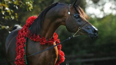 Pferde Leinwand Kostenlos Downloaden 390x220 - Pferde Leinwand Kostenlos Downloaden
