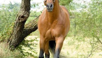 Pferde Lustige Bilder Kostenlos Herunterladen 390x220 - Pferde Lustige Bilder Kostenlos Herunterladen