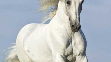 Pferde Nrw 390x220 - Pferde Nrw