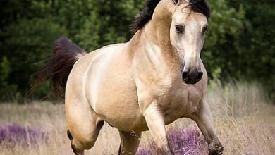 Pferde Nrw Für Facebook 390x220 - Pferde Nrw Für Facebook