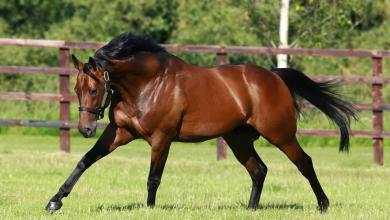 Pferde Online Kaufen Kostenlos Downloaden 390x220 - Pferde Online Kaufen Kostenlos Downloaden