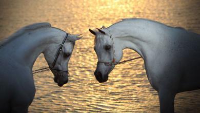 Pferde Pferde Pferde 390x220 - Pferde Pferde Pferde