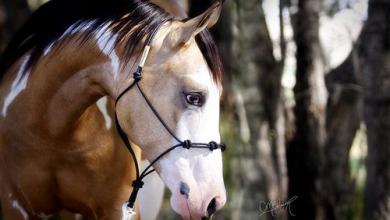 Pferde Profilbilder Kostenlos Herunterladen 390x220 - Pferde Profilbilder Kostenlos Herunterladen