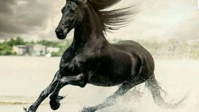 Pferde Rasse 390x220 - Pferde Rasse