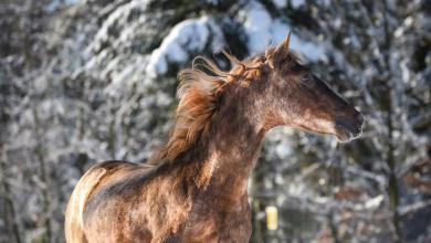 Pferde Reiten Bilder Für Whatsapp 390x220 - Pferde Reiten Bilder Für Whatsapp
