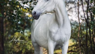 Pferde Retten 390x220 - Pferde Retten