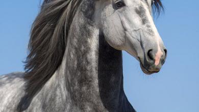 Pferde Retten Kostenlos Herunterladen 390x220 - Pferde Retten Kostenlos Herunterladen