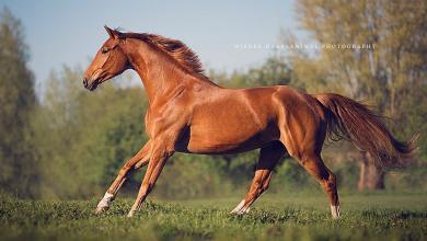 Pferde Schöne Bilder Für Facebook 390x220 - Pferde Schöne Bilder Für Facebook