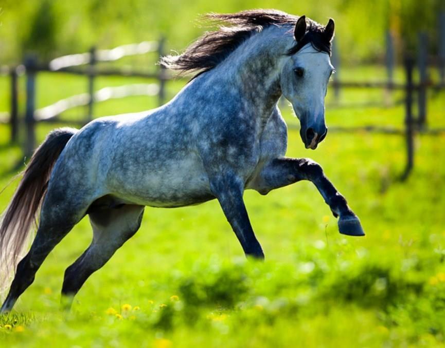 malvorlagen pferde  bilder und sprüche für whatsapp und