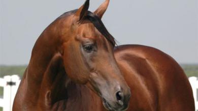 Pferde Schimmel Bilder Kostenlos Herunterladen 390x220 - Pferde Schimmel Bilder Kostenlos Herunterladen