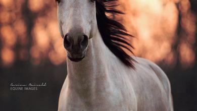 Pferde Schweiz Für Facebook 390x220 - Pferde Schweiz Für Facebook