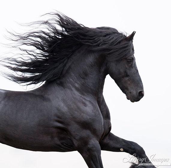 Pferde Sonnenuntergang Bilder Kostenlos Herunterladen Bilder Und Spruche Fur Whatsapp Und Facebook Kostenlos