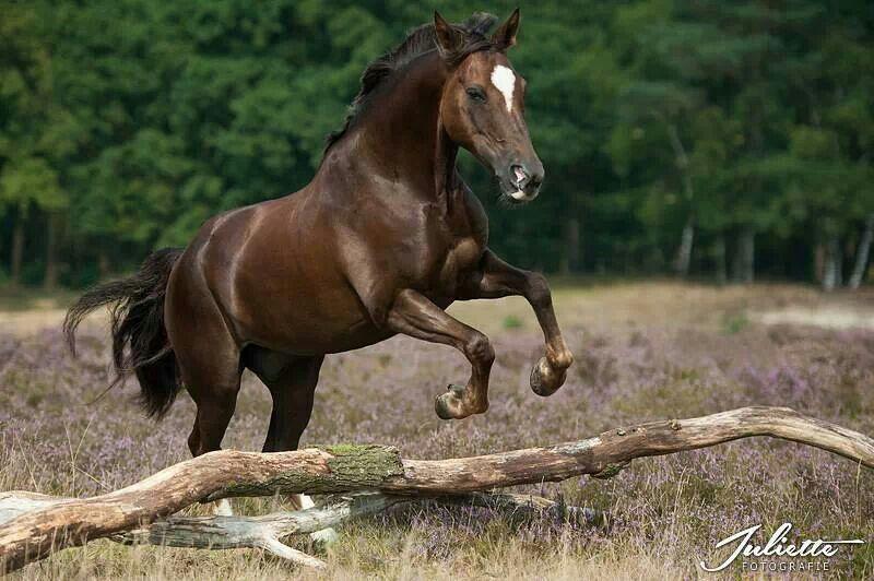 pferde spiele