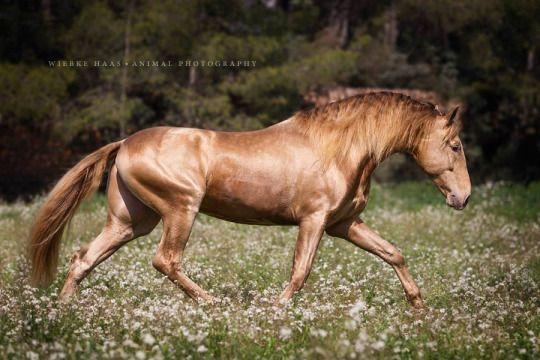 Pferde Spiele Zum Herunterladen