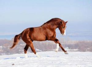 Pferde Sprüche Bilder 300x219 - Pferde Sprüche Bilder