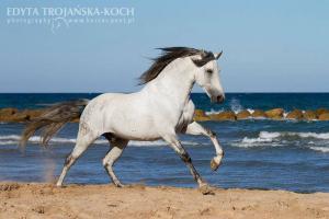 Pferde Suchen 300x200 - Pferde Suchen