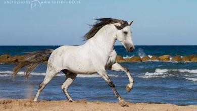 Pferde Suchen 390x220 - Pferde Suchen