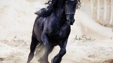 Pferde Suchen Für Facebook 390x220 - Pferde Suchen Für Facebook