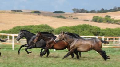 Pferde Suchen Kostenlos Herunterladen 390x220 - Pferde Suchen Kostenlos Herunterladen