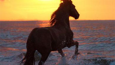 Pferde Und Pony Bilder Kostenlos Herunterladen 390x220 - Pferde Und Pony Bilder Kostenlos Herunterladen