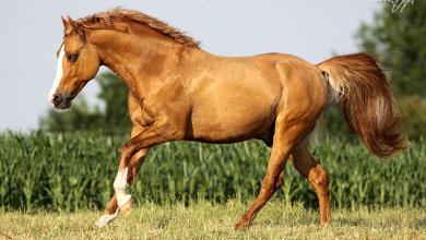 Pferde Und Ponys 390x220 - Pferde Und Ponys
