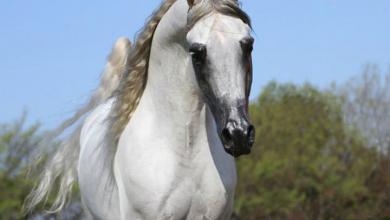 Pferde Und Ponys Für Whatsapp 390x220 - Pferde Und Ponys Für Whatsapp