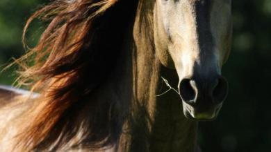 Pferde Und Reiten 390x220 - Pferde Und Reiten