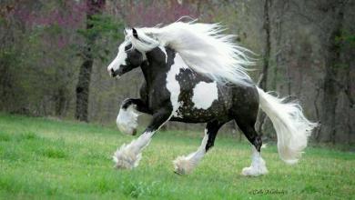 Pferde Und Reiten Für Whatsapp 390x220 - Pferde Und Reiten Für Whatsapp